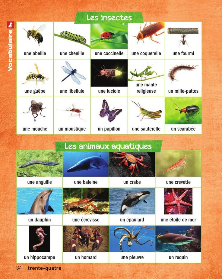 #ClippedOnIssuu from Francais en images_Complet