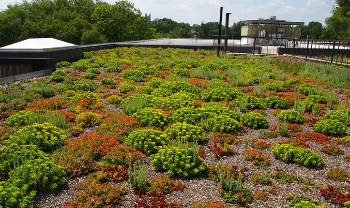 Sidwell Friends School - green roof