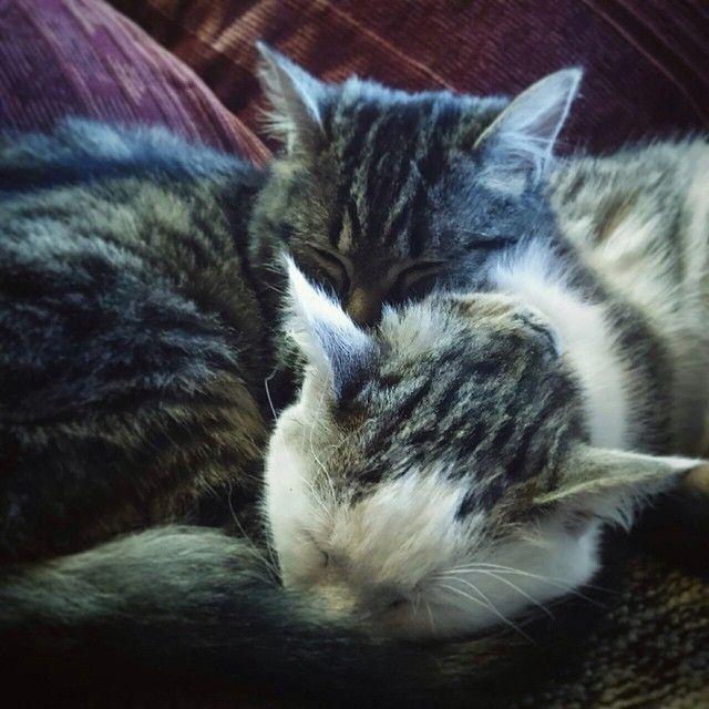 Un po' di riposo mi sembra più che giusto  #relax #domenicaitaliana #cats #pets #animal
