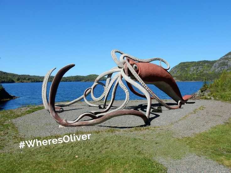"""Talk about a whopper! In 1878, fishermen near Glovers Harbour, NL caught a giant squid that was 16.7 metres (55 feet) long. It was """"recognized by the Guinness Book of Records as the biggest squid in the world."""" A replica was built in 2001. Oliver thinks this is a little too much calamari for his taste. Find out more at: cbc.ca/archives/entry/sizable-squid-in-glovers-harbour-nfld"""