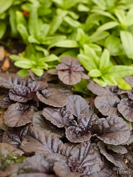 Bare, shady spots in your garden can be beautiful when carpeted with a colorful mix of perennials that thrive in the shadows. Here's a collection of some of our favorite groundcovers that don't mind living on the dark side./