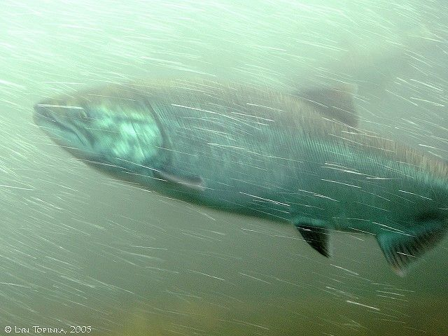 1000 images about pics of washington state on pinterest for Bonneville dam fish count