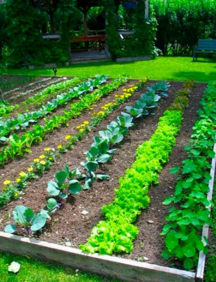 7 best Vegetables Garden idea images on Pinterest | Vegetable garden ...