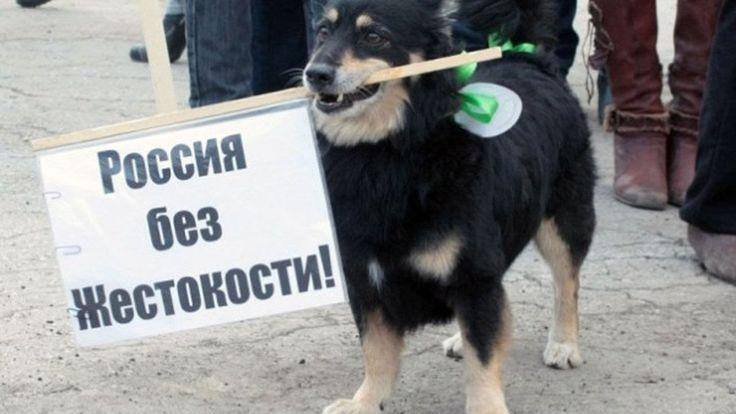 ✔Спасение животных Митинги в защиту животных по всей России