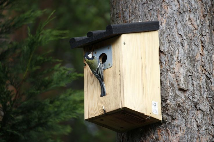 Ilmaisia Kuvia : puu, luonto, metsä, haara, puun lehti, eläin, villieläimet, vihreä, viidakko, mökki, eläimistö, suoja, pesä, rotu, lintuhuone, forest asukkaat, lintu syöttölaite, riippua, pesimäpaikallaan, nesting box, pesintä help, ulkona rakenne 4332x2888 -  - 873731 - Ilmainen Kuvapankki - PxHere