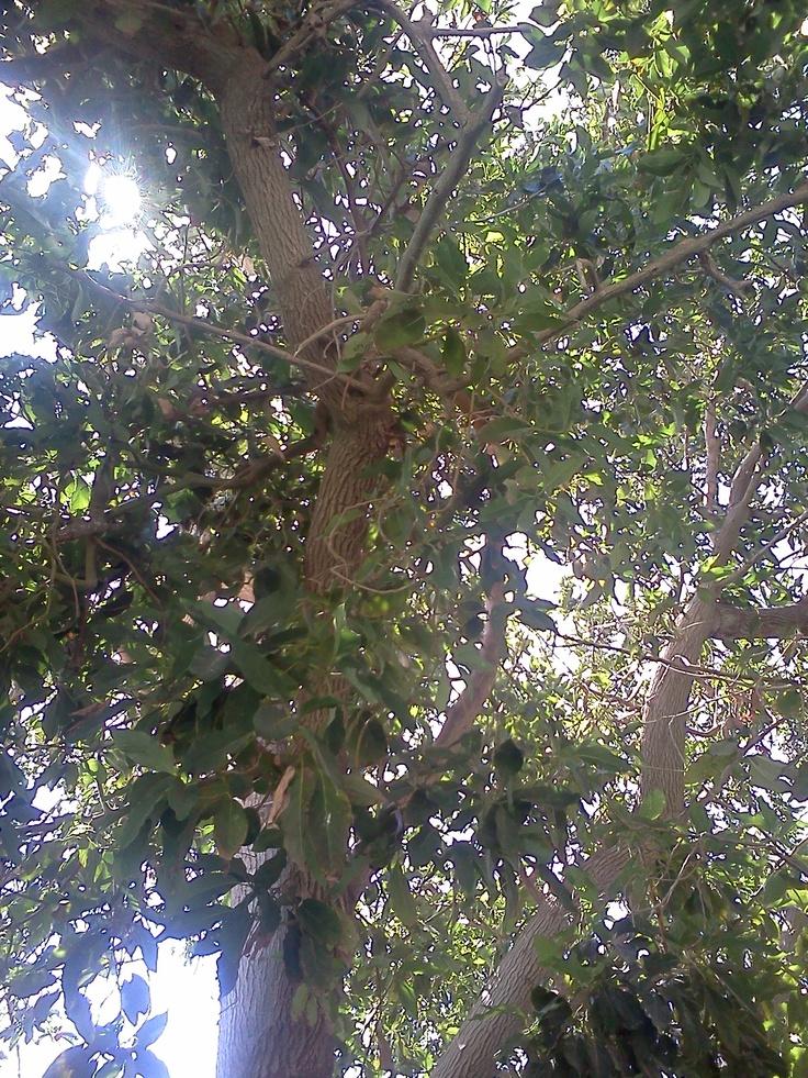 hojas...muchas hojas