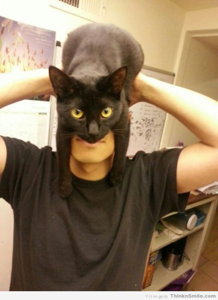 I Am.... The Catman