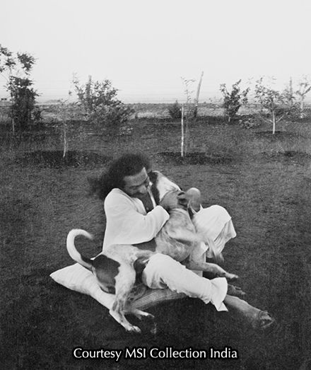 avatar meher baba | home meher baba links meher baba photos meher baba biography website ...