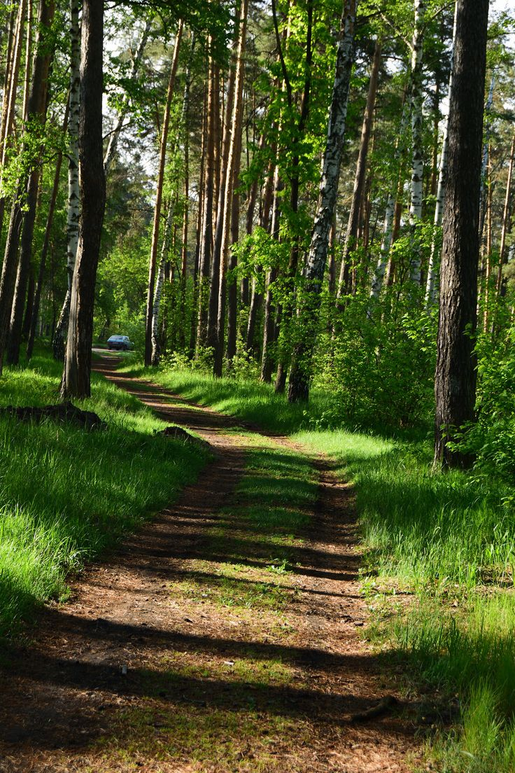 https://flic.kr/p/V7np1d | Walk along the shady avenues of the spring forest.