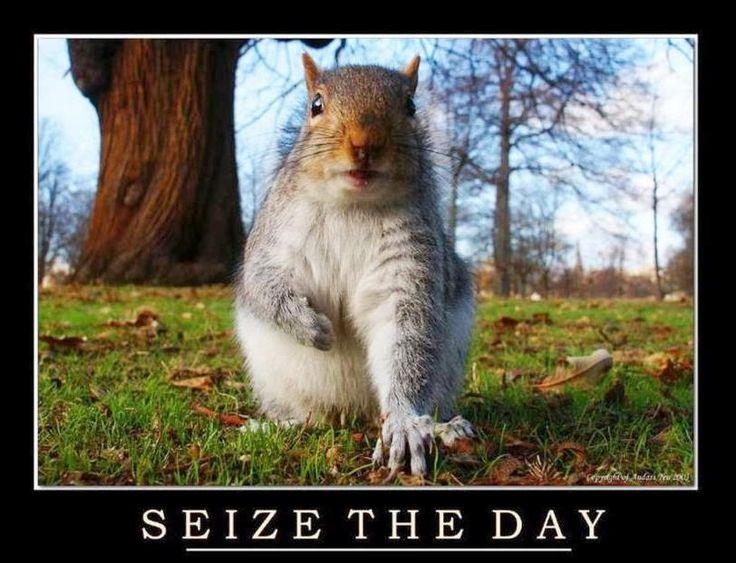 squirrel appreciation day | Happy Squirrel Appreciation Day!