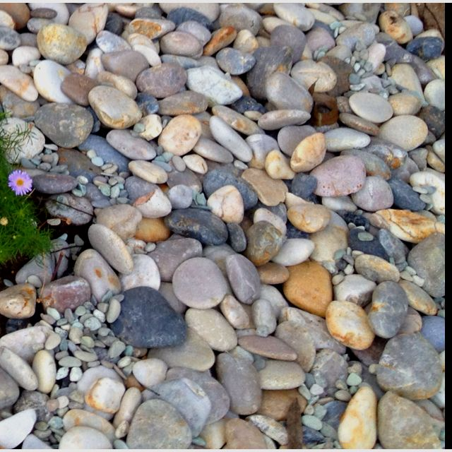DIY using river pebble as an alternative to normal wood chip mulch.