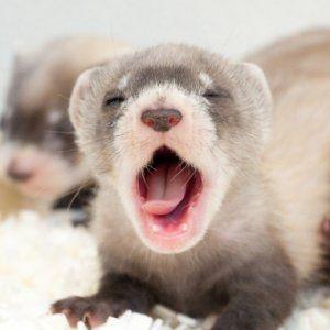 Шокирующие животные-переростки (11 фото)