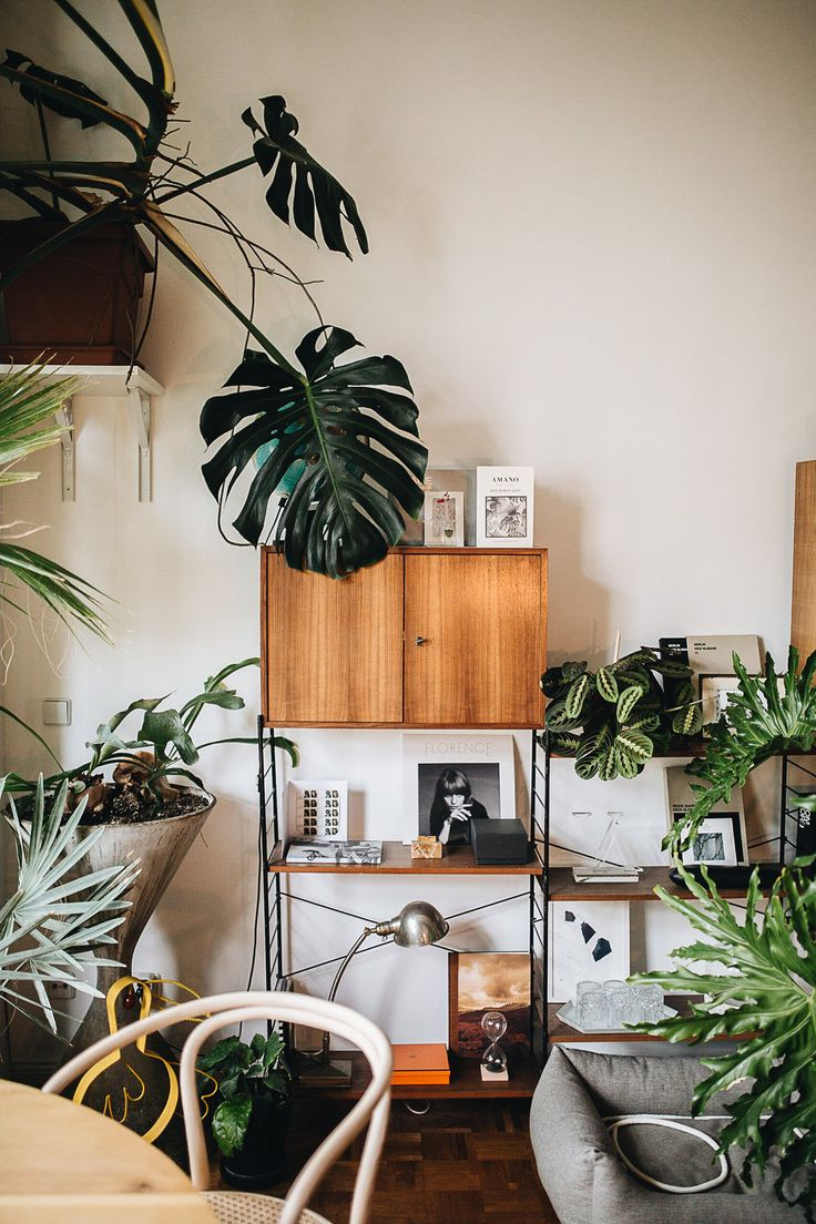 Die besten 25 zimmerpflanzen ideen auf pinterest for Ausgefallene zimmerpflanzen