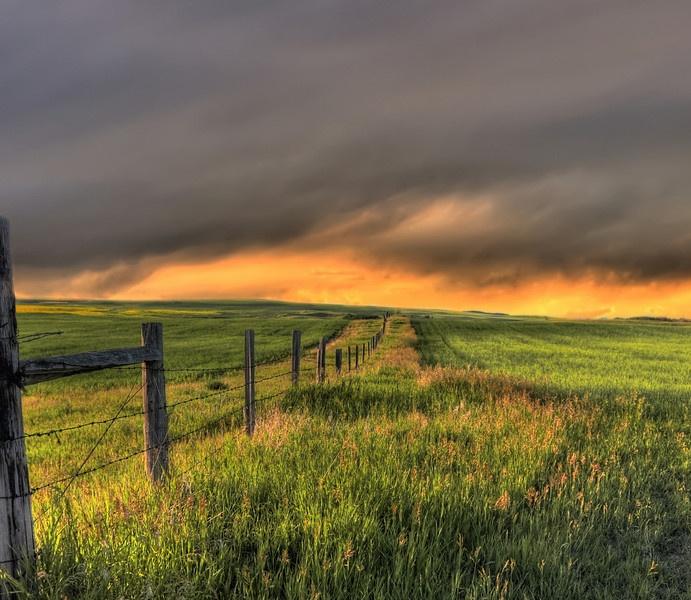Canadian Prairies (in an approaching summer storm) Photo: Anita Erdmann