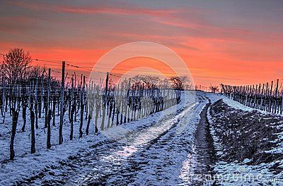 Pathway In Winter Evening - Download From Over 36 Million High Quality Stock Photos, Images, Vectors. Sign up for FREE today. Image: 59626219