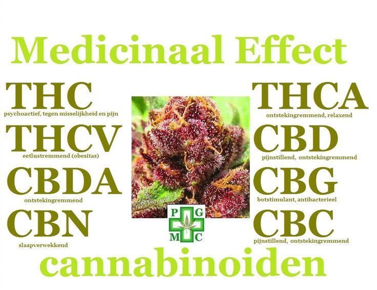Hieronder een overzicht van de meest voorkomende cannabinoïden en de medicinale eigenschappen   - Tetrahydrocannabinolic Acid THC-A THC-A is een niet-psychoactief zure precursor van THC en vermindert: angst, depressie, ontstekingremmend, anorexia, pijn, IBS / Crohn, spasticiteit, aanvallen (neuromusculaire), stimuleert botgroei, misselijkheid en meer zonder de psychoactiviteit van THC. Studies met een THC-A gebruik, hebben zelfs aangetoond dat het tumoren verminderd van sommige kankers. In…