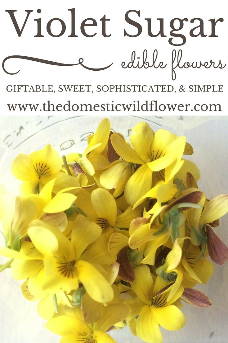 Violet Sugar: Edible, Giftable, Sweet & Simple | The Domestic Wildflower click through to read how to make this simple and sweet preserve to give and share!
