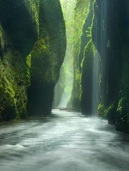.Oregon, Buckets Lists, Favorite Places, Nature, Oneonta Gorge, Beautiful Places, Columbia Rivers Gorge, Travel, Rainforests Canyon