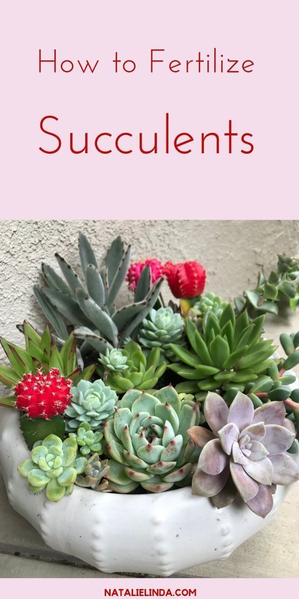 Fertilizing Succulents Can Have A Positive Impact On Their Growth