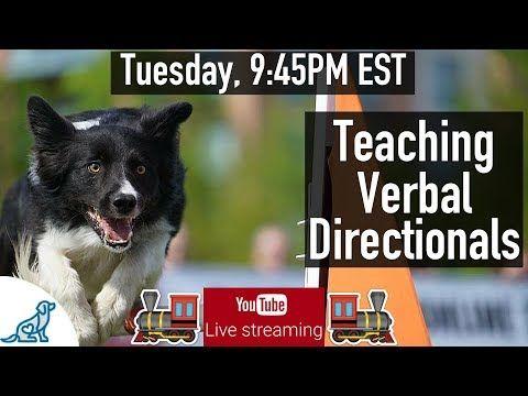 Dog Agility Training Teaching Directionals Professional Dog
