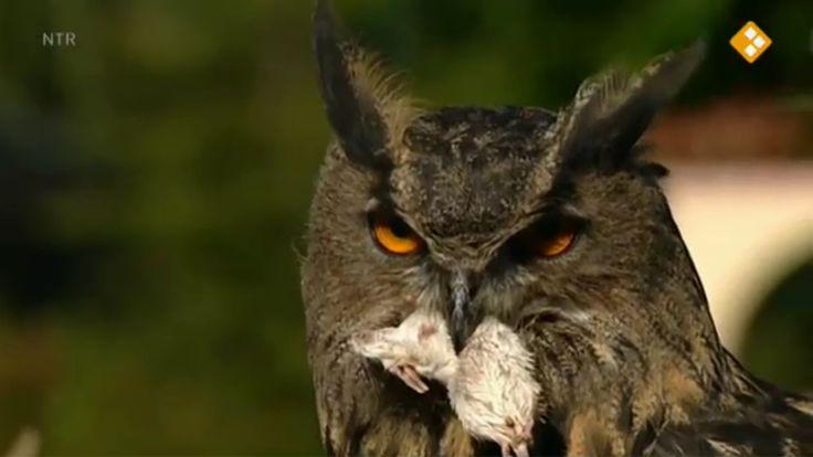 Thema: Herfst. Mylène vindt een braakbal van een uil. In een vogelpark leert ze wat een braakbal is en welke bijzondere kenmerken uilen hebben aan kop, oren, veren en ogen. Jurre pluist uilenballen uit. Prof. Dr. Testkees: vakwerkbrug.