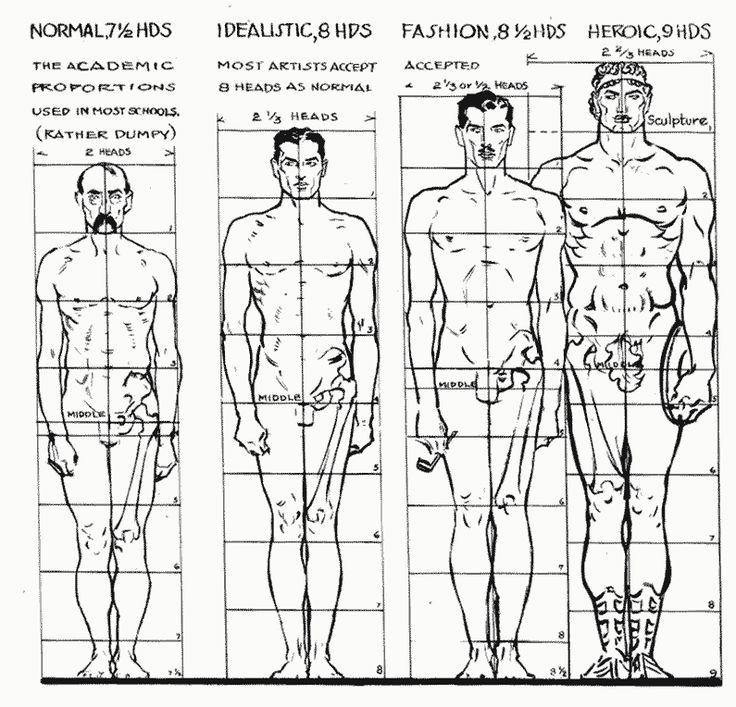 Andrew Loomis - Proporciones Masculinas: De realistas a ideales (dibujo…