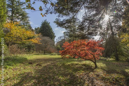 Stunning #Autumn colours in #DyffrynGardens in the Vale of Glamorgan. More photos on  http://www.paulfearsphoto.co.uk/index.php?cat=photographs&id=16&album=Historical-Building-Photographs&sub_album=Photos-of-Dyffryn-Gardens-Vale-of-Glamorgan-UK