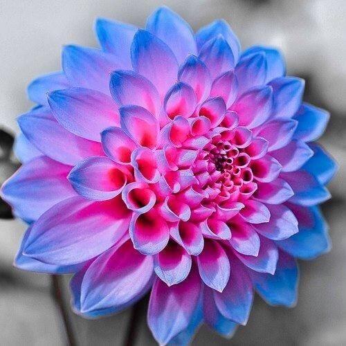 お届け感動ストーリー。・゚♡゚・: 【幸せを呼び込むキセキの青い花】 RTしたらいいことあるよ♡   き!れ!い!