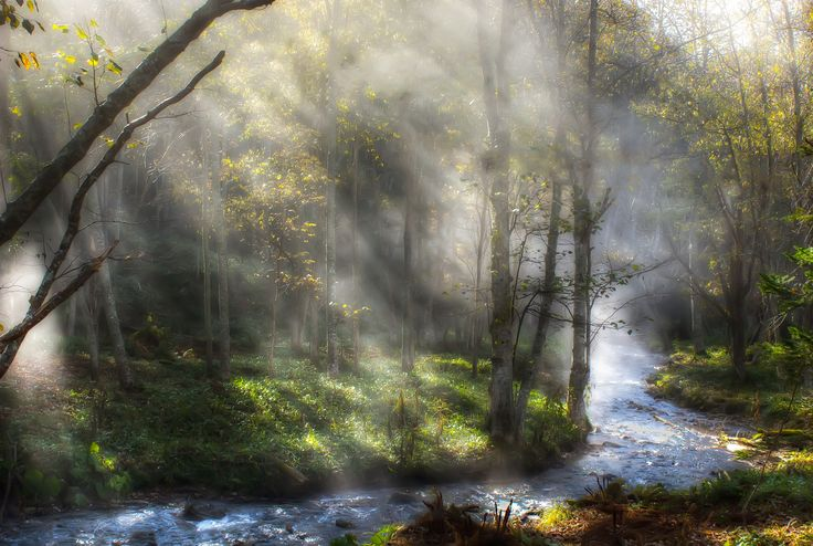 Fog & Sunlight by Miki Asai on 500px