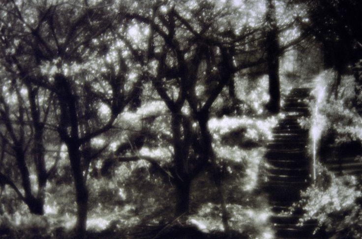 Jardin foto Anatol 1997