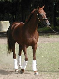 Funny Cide, in the Belmont.