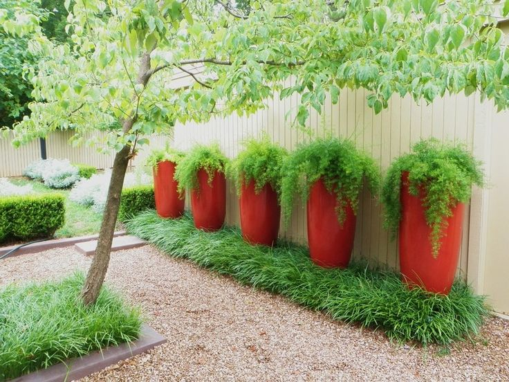 Asparagus Ferns in Red containers- purple or deep blue would be better I think