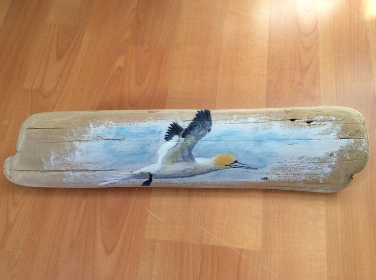 Study of a gannet on Banff beach driftwood