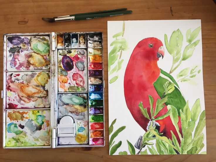 King Parrot - Fine Art Giclée of a red and green parrot by LittleRowanRedhead on Etsy