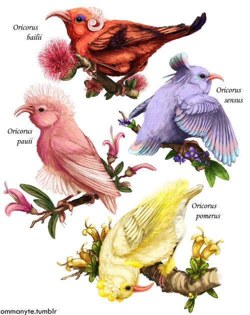 "ommanyte: "" ORICORIO. Some really fab new Pokémon based on Hawaiian Honeycreepers. Just look at that Adaptive Radiation @v@. I wanted to emulate that style you see in those beautifully illustrated old bird identification books """