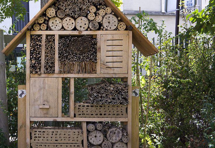 В Севастополе открыли гостиницу для насекомых - ворот@крыма - новости, комментарии