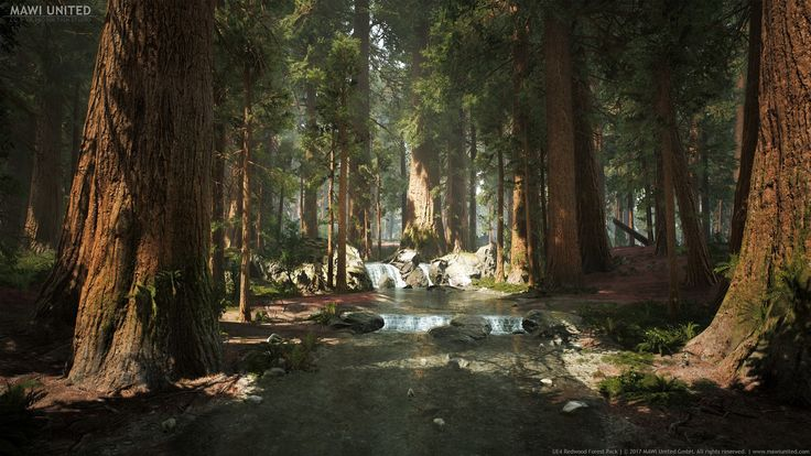 UE4 Redwood Forest, Willi Hammes on ArtStation at https://www.artstation.com/artwork/52Q8P