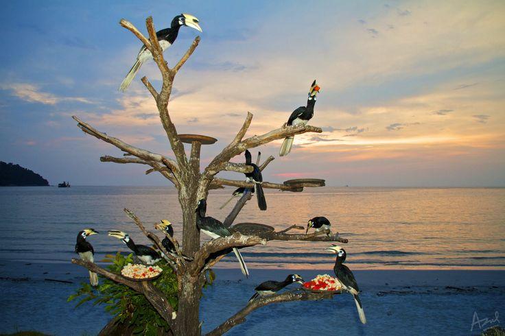 AFAR.com Highlight: Hornbill Beach by Azul Adnan & list of best travel spots to see animals