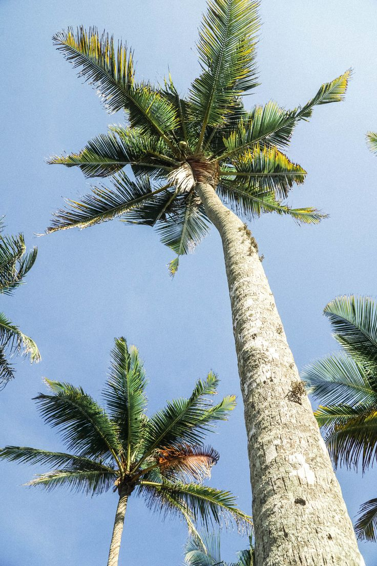 Sri Lanka is home to the tallest palm trees I have ever seen! SEEK SEE TRAVEL - Read our latest blog post about it!