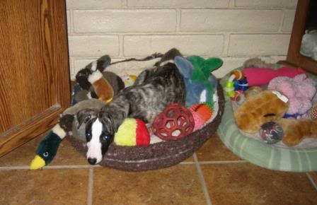 Toy Pile!!  Puppy and Ducky seem to have the same expression! LOL: Toys Pile