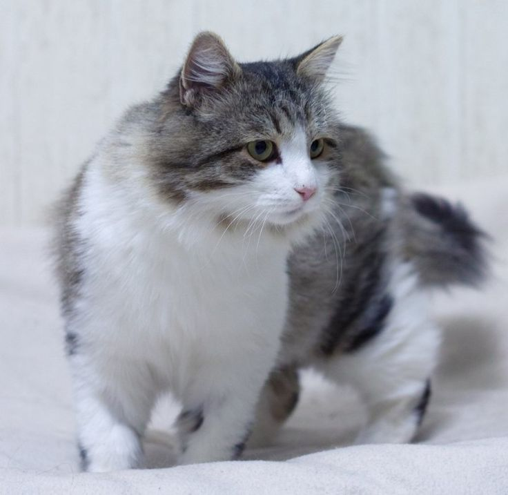 25 Male Names For Grey And White Cats Grey And White Cat White Cats Cat Aesthetic