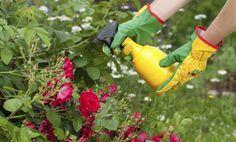Alimentar a tus vegetales o cultivos sin químicos, además de evitarte ciertos riesgos, contribuirá a que cooperes con el cuidado del medio ambiente. Por eso te contamos los 5 fertilizantes naturales para plantas y flores que puedes utilizar según te convenga.Si los vegetales o plantas que deseas fertilizar son para