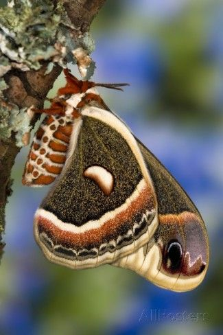 112 Best Moths Images On Pinterest  Butterflies Caterpillar And Extraordinary Small Moths In Bathroom Decorating Inspiration