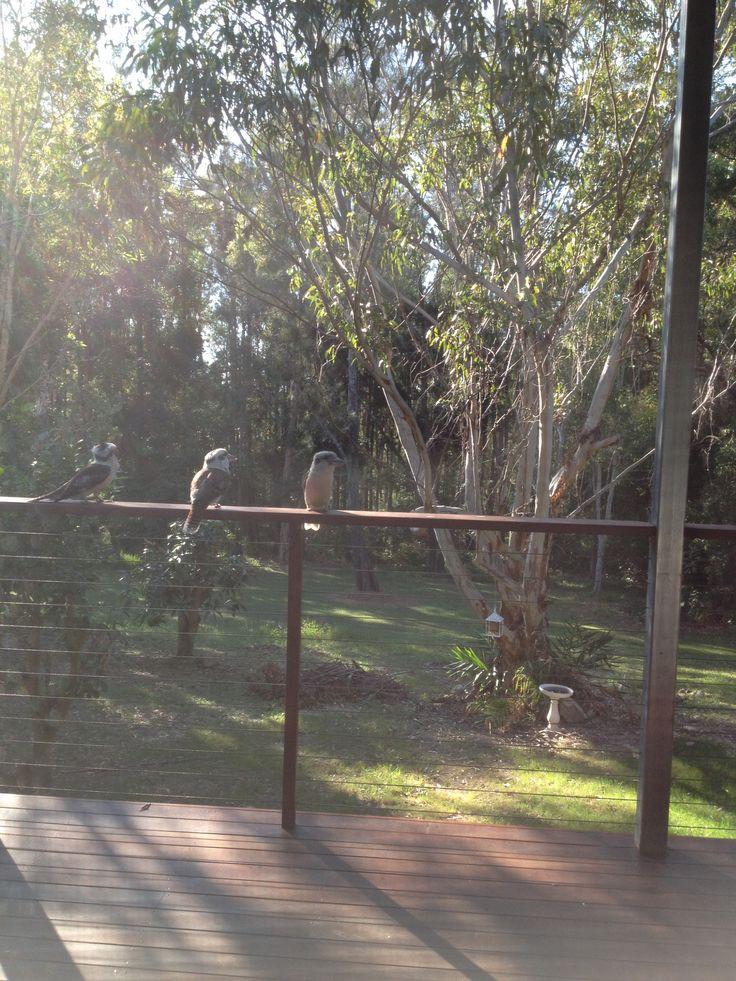 Beach house deck kookaburras