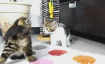 Paws the Work Week for These 18 Cute Kitty GIFs