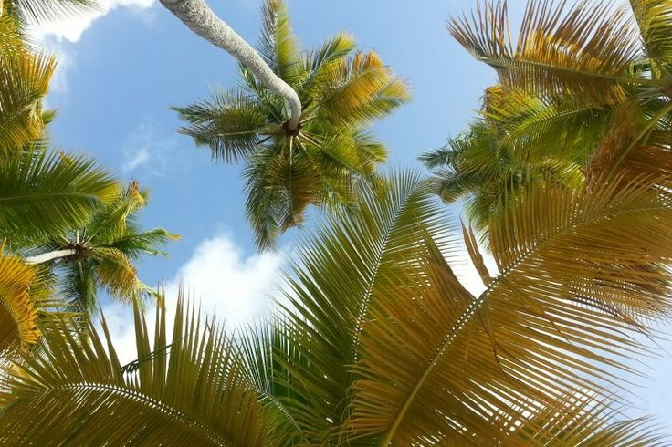 View from the sand - Palm Trees La caravelle Beach Sainte-Anne - Guadeloupe Islands