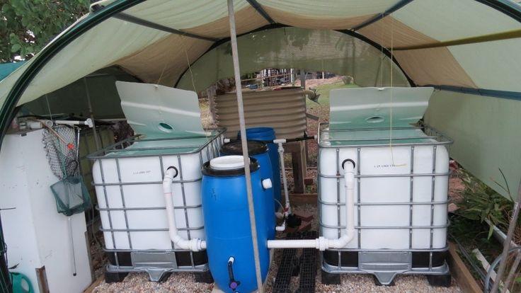 Image of: Backyard Fish Farming Tilapia