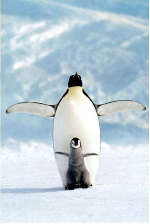 Seriously, what is cuter than a Penguin?