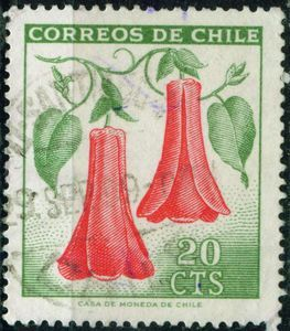 Lapageria rosea , commonly known as Chilean bellflower or Copihue . Post stamp printed in Chile 1969