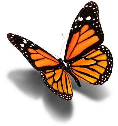 best 25 3d butterfly tattoo ideas only on pinterest 3d. Black Bedroom Furniture Sets. Home Design Ideas